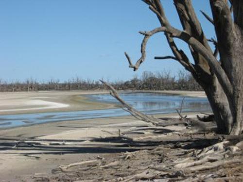 Saline Wetlands