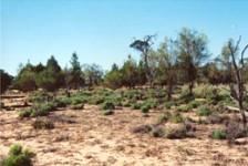 Sand Dune System